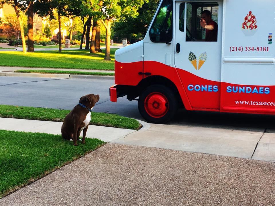 keller ice cream, dogs and ice cream, ice cream truck, ice cream cone